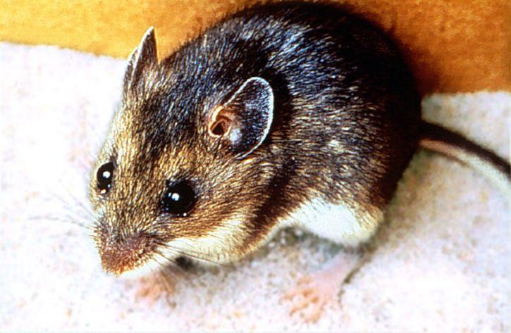allontanare topi e scarafaggi